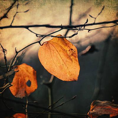 Photograph - Last Leaves by Taylan Apukovska