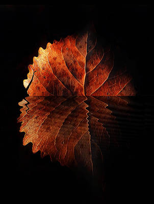 Autumn Leaf On Water Photograph - Last Light On Water by Terril Heilman