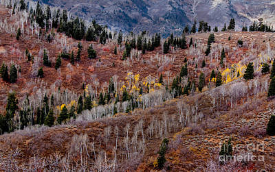 Payson Photograph - Last Of The Aspen Color by Robert Bales
