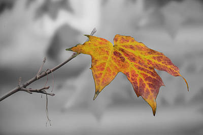 Photograph - Last Of The Autumn Leaves by Veli Bariskan