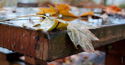 Photograph - Last Of The Leaves by Gwyn Newcombe
