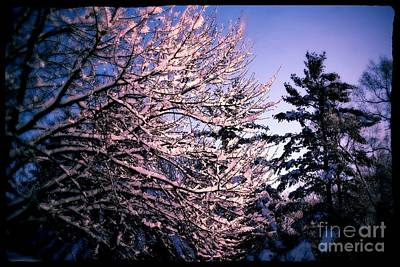 Frank J Casella Royalty-Free and Rights-Managed Images - Last Peek of Winter Sun by Frank J Casella