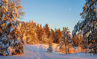 Photograph - Last Rays Of Light In The Winter Forest by Ismo Raisanen
