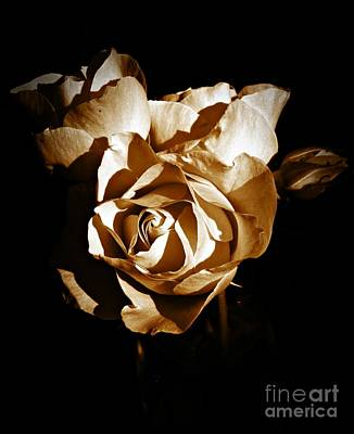 Photograph - Last Roses Of Summer Sepia by Chalet Roome-Rigdon