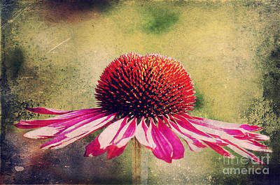 Abstracted Coneflowers Photograph - Last Summer Feeling by Angela Doelling AD DESIGN Photo and PhotoArt