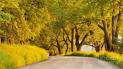 Photograph - Last Sun On Darling Hill Road by Alan L Graham