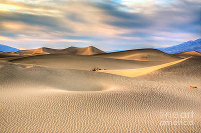 Late Afternoon At The Mesquite Dunes Art Print