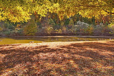 Late Afternoon Autumn Sunshine At The Lake Art Print