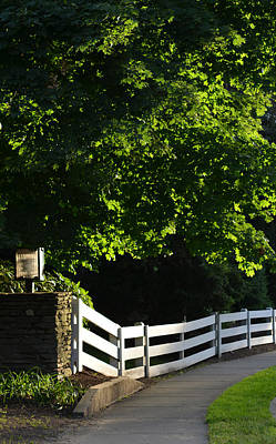 Dappled Light Photograph - Late Afternoon by Corinne Rhode