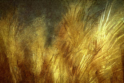 Painting - Late Afternoon Pampas Grasses by Jean Moore