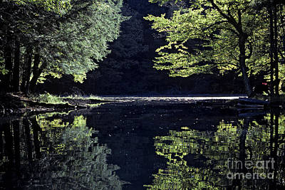 Late Afternoon Reflection Art Print