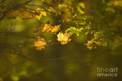 Autumn Leaf Photograph - Late Autumn by Diane Diederich