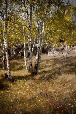 Photograph - Late Autumn by Ellen Heaverlo