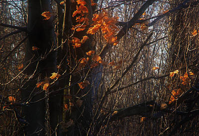 Photograph - Late Autumn Leaves by Jim Vance