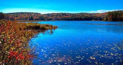 Late Autumn On Loon Lake Art Print by David Patterson