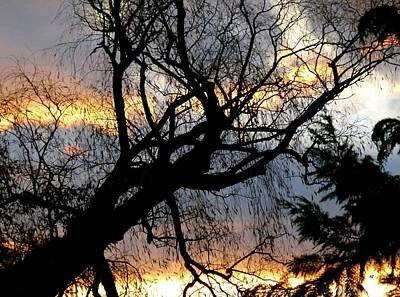 Photograph - Late Autumn Silhouettes by Will Borden