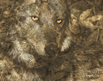 Judy Wood Digital Art - Late Autumn Wolf by Judy Wood
