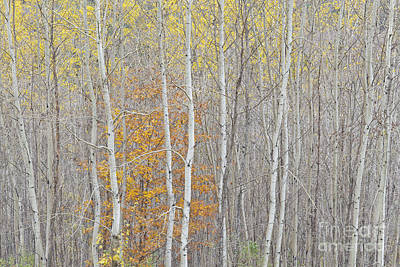 Photograph - Late Autumn Woods by Alan L Graham