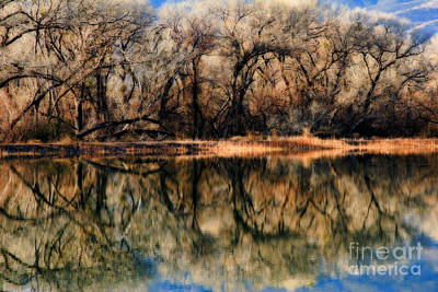 Photograph - Late December Reflection At Dead Horse by Ron Chilston