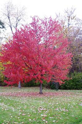 Photograph - Late Fall by Sheila Byers