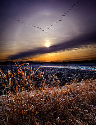 Goose Portrait Photograph - Late For Dinner by Phil Koch