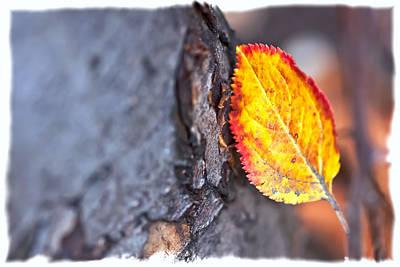 Photograph - Late In Season by Jonathan Nguyen