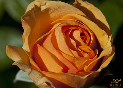 Photograph - Late Rose by Kenneth Hadlock