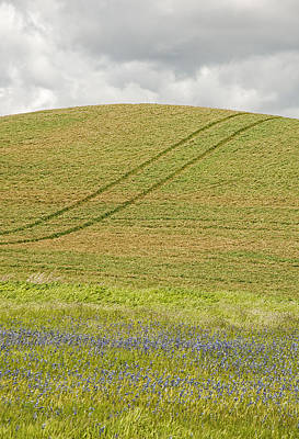 Contour Farming Photograph - Late Spring Tracks by Latah Trail Foundation