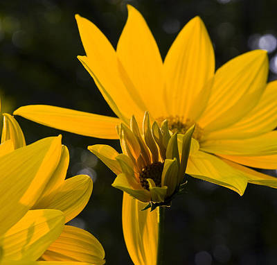 Art Print featuring the photograph Late Summer Blooms by Michael Friedman