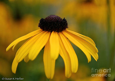 Photograph - Late Summer Blooms by Susan Herber