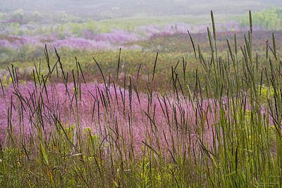 Photograph - Late Summer Grasses by Marty Saccone