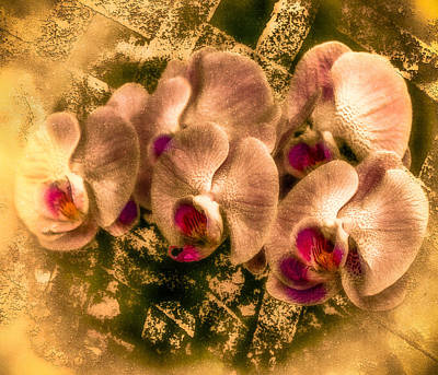 Digital Art - Late Summer Orchids by Jill Balsam