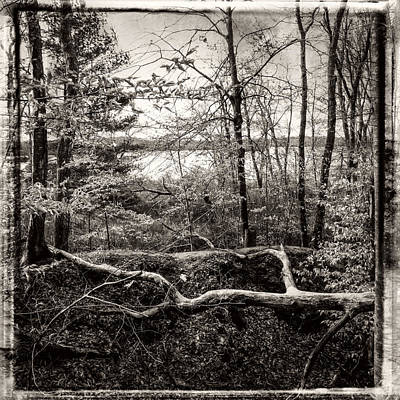 Photograph - Late Winter Forest Black And White by Frank Winters