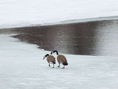 Photograph - Late Winter Geese by Gene Cyr