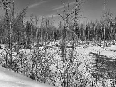 Photograph - Late Winter Swamp by Gene Cyr