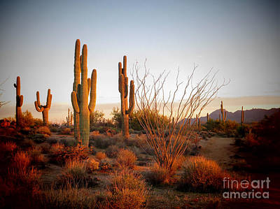 Photograph - Latigo Trail Saguaros by Marianne Jensen