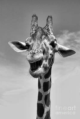 Photograph - Laughing Giraffe Black And White by Jim And Emily Bush