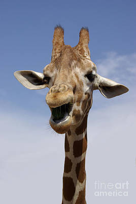 Photograph - Laughing Giraffe by Jim And Emily Bush