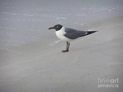 Photograph - Laughing Gull by Deborah DeLaBarre