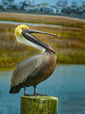 Photograph - Laughing Pelican by Sandra Anderson