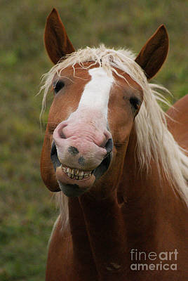 Photograph - Laughing Smiling Happy Horse by Stanza Widen