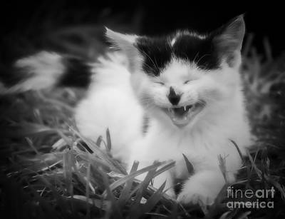 Photograph - Laughter Is The Best Medicine by Julie Clements