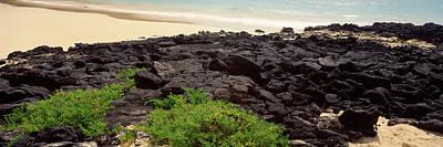 Galapagos Photograph - Lava Rocks At A Coast, Floreana Island by Panoramic Images
