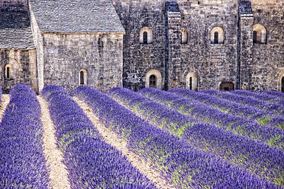 Provence Photograph - Lavande Conventuel by Joachim G Pinkawa