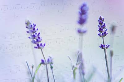Lavender Blues Art Print by Jenny Rainbow