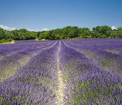 Art Print featuring the photograph Lavander Field by Antonio Jorge Nunes