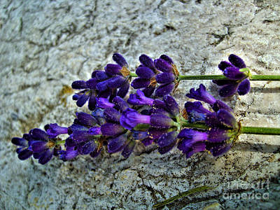 Photograph - Lavender On White Stone by Nina Ficur Feenan