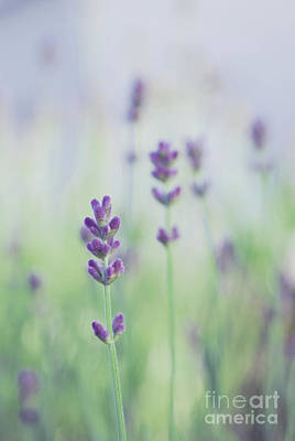 Soft Colors Photograph - Lavandines - 117 by Variance Collections