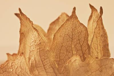 Seed Macro Photograph - Lavatera Seed Macro  by Sandra Foster