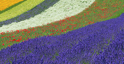 Photograph - Lavendar And Flower Field by Keren Su